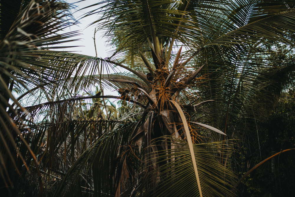 sesja pod palmami